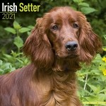 Irish Setter Wall Calendar 2021 by Avonside