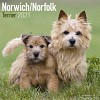 Norwich/Norfolk Terrier Wall Calendar 2021 by Avonside