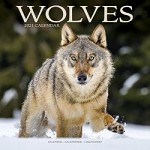 Wolves Wall Calendar 2021 by Avonside