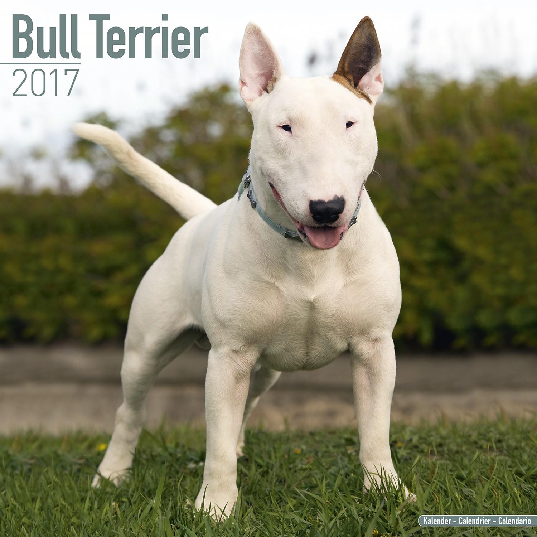 Bull Terrier Calendar 2017