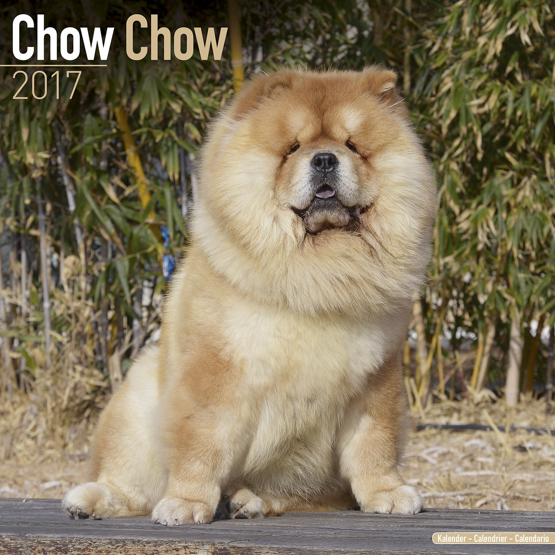 Calendar Dogs : Chow calendar pet prints inc