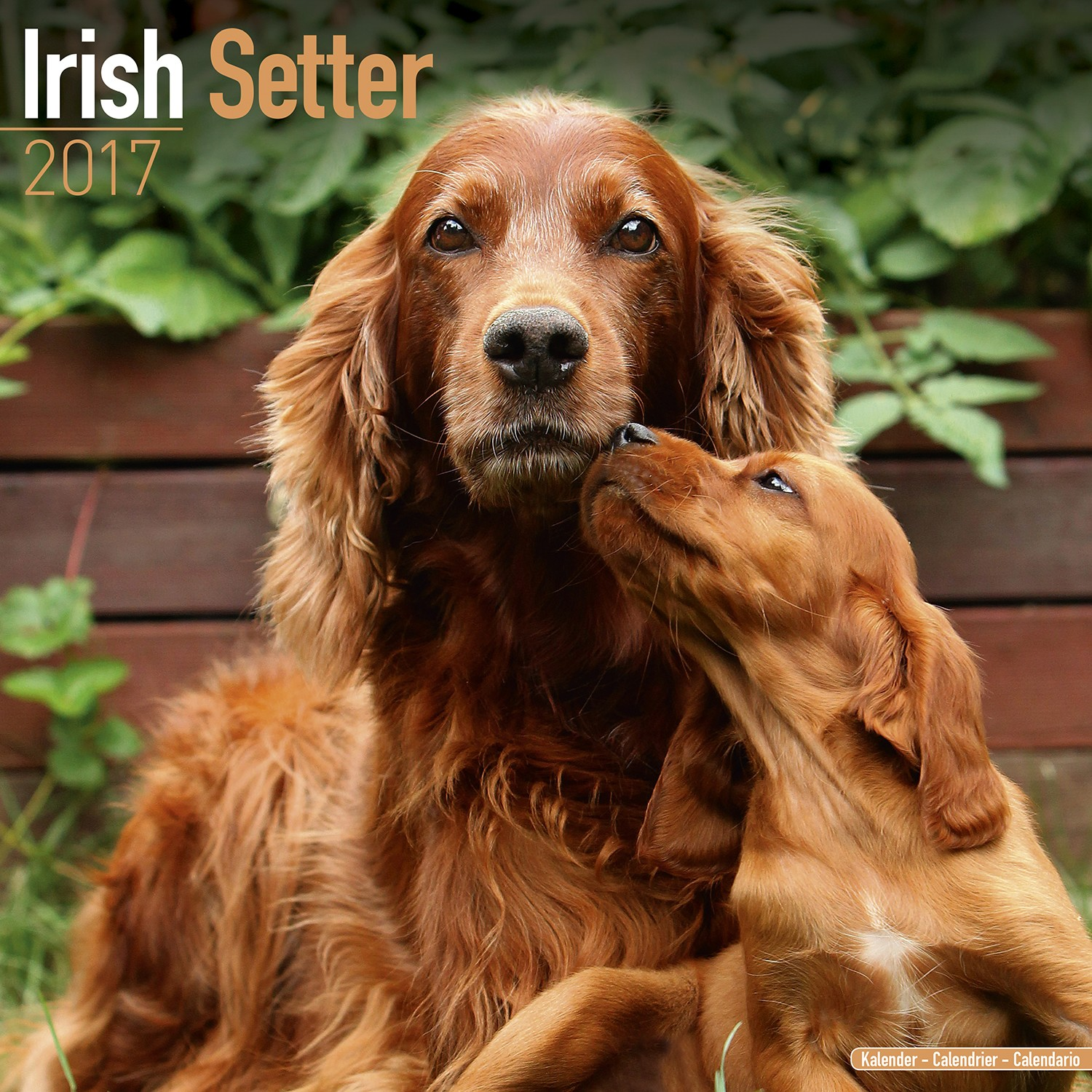 irish setter calendar 2017 pet prints inc. Black Bedroom Furniture Sets. Home Design Ideas