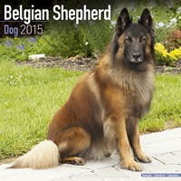 Belgian Shepherd Dog Wall Calendar 2015