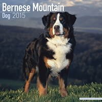 Bernese Mountain Dog Wall Calendar 2015