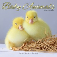 Baby Animals Wall Calendar 2018