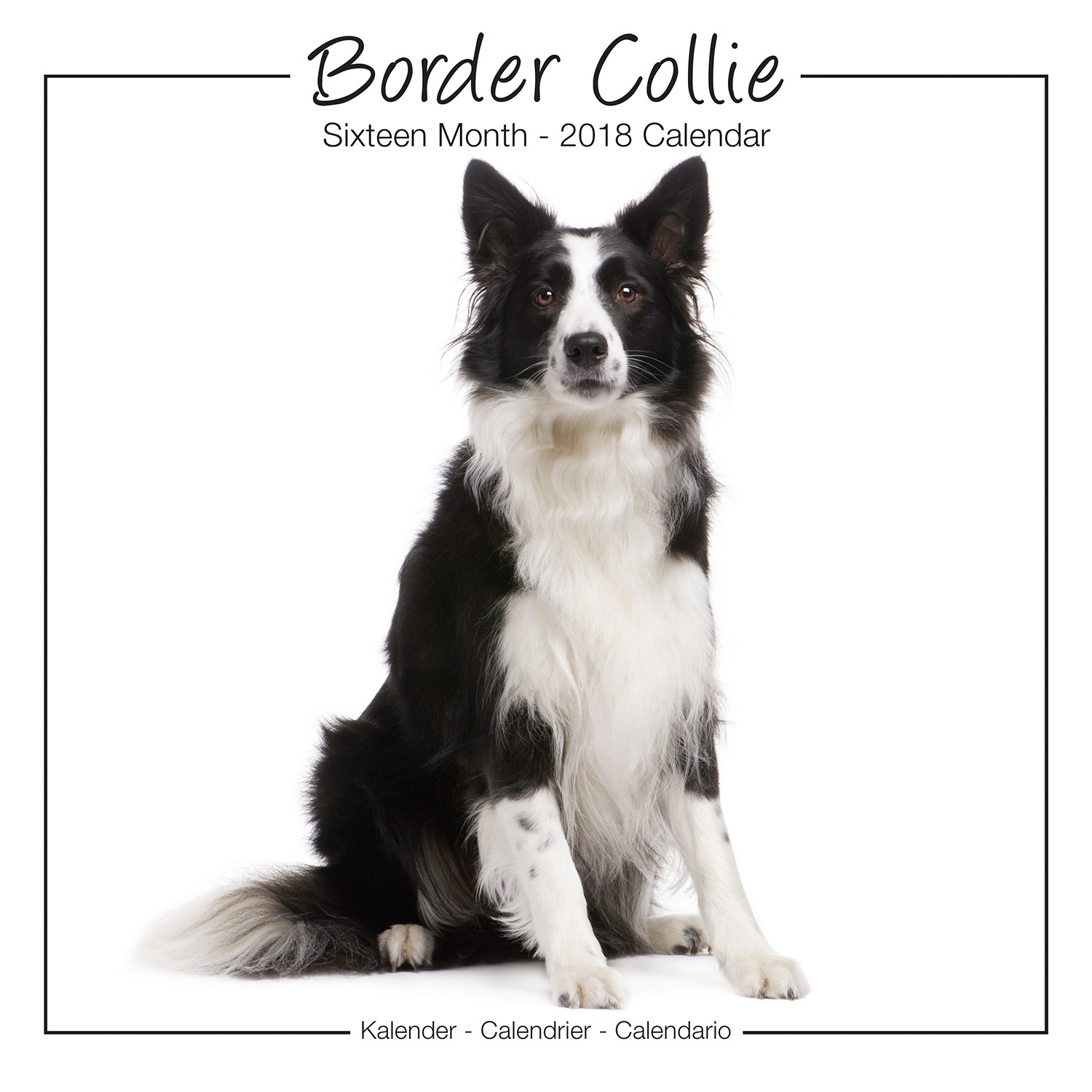 Border Collie Studio Range Wall Calendar 2018