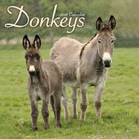 Donkeys Wall Calendar 2018