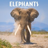 Elephants Wall Calendar 2018