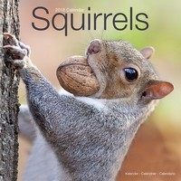 Squirrels Wall Calendar 2018