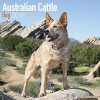 Australian Cattle Dog Wall Calendar 2018