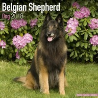Belgian Shepherd Dog Wall Calendar 2018