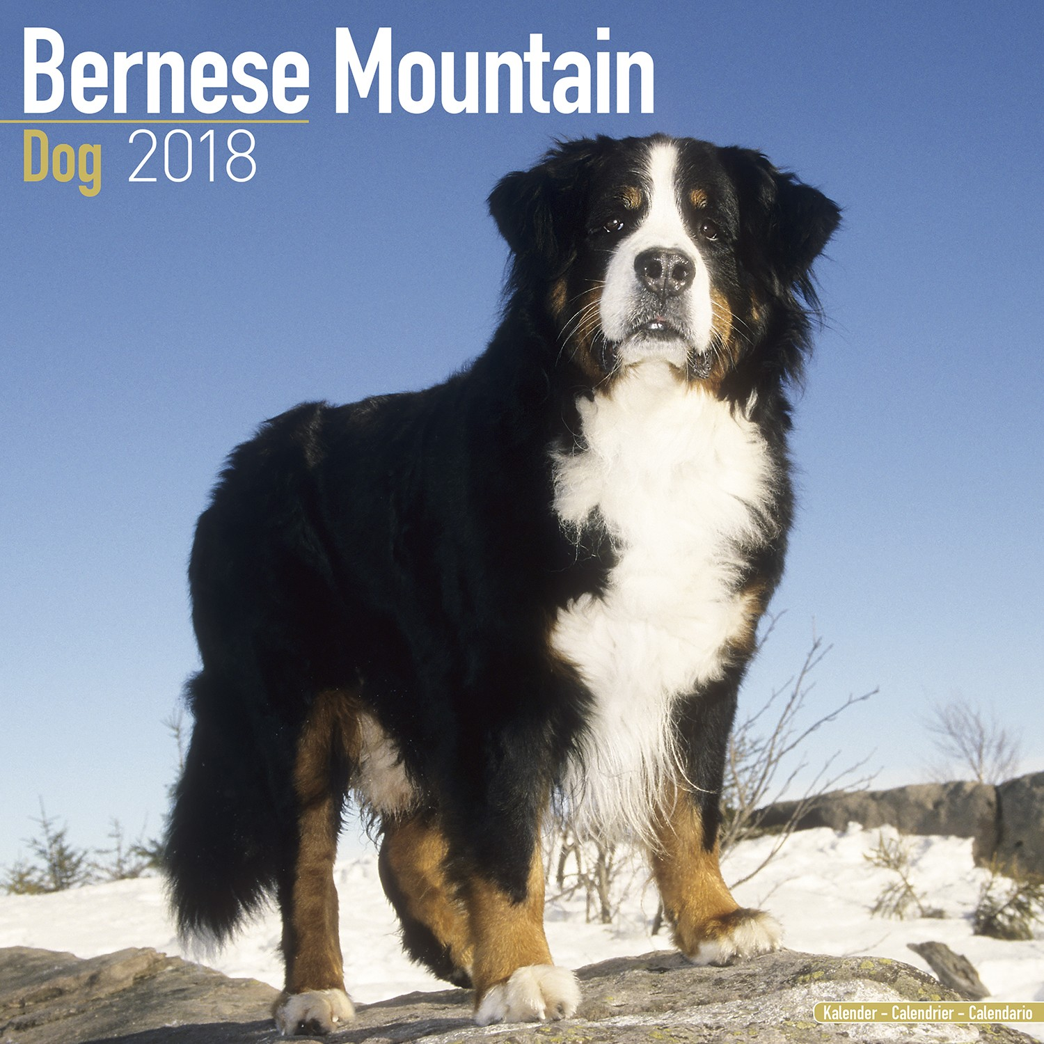 Bernese Mountain Dog Wall Calendar 2018