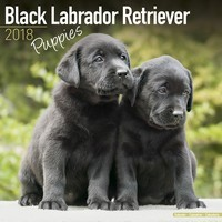 Black Labrador Puppies Wall Calendar 2018