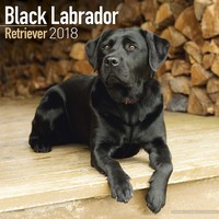 Black Labrador Retriever Wall Calendar 2018