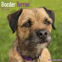 Border Terrier Wall Calendar 2018