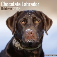 Chocolate Lab Retriever Wall Calendar 2018