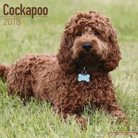 Cockapoo Wall Calendar 2018