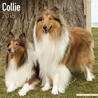 Collie Wall Calendar 2018