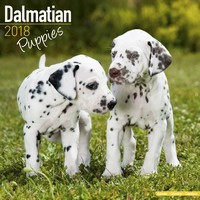 Dalmatian Puppies Wall Calendar 2018