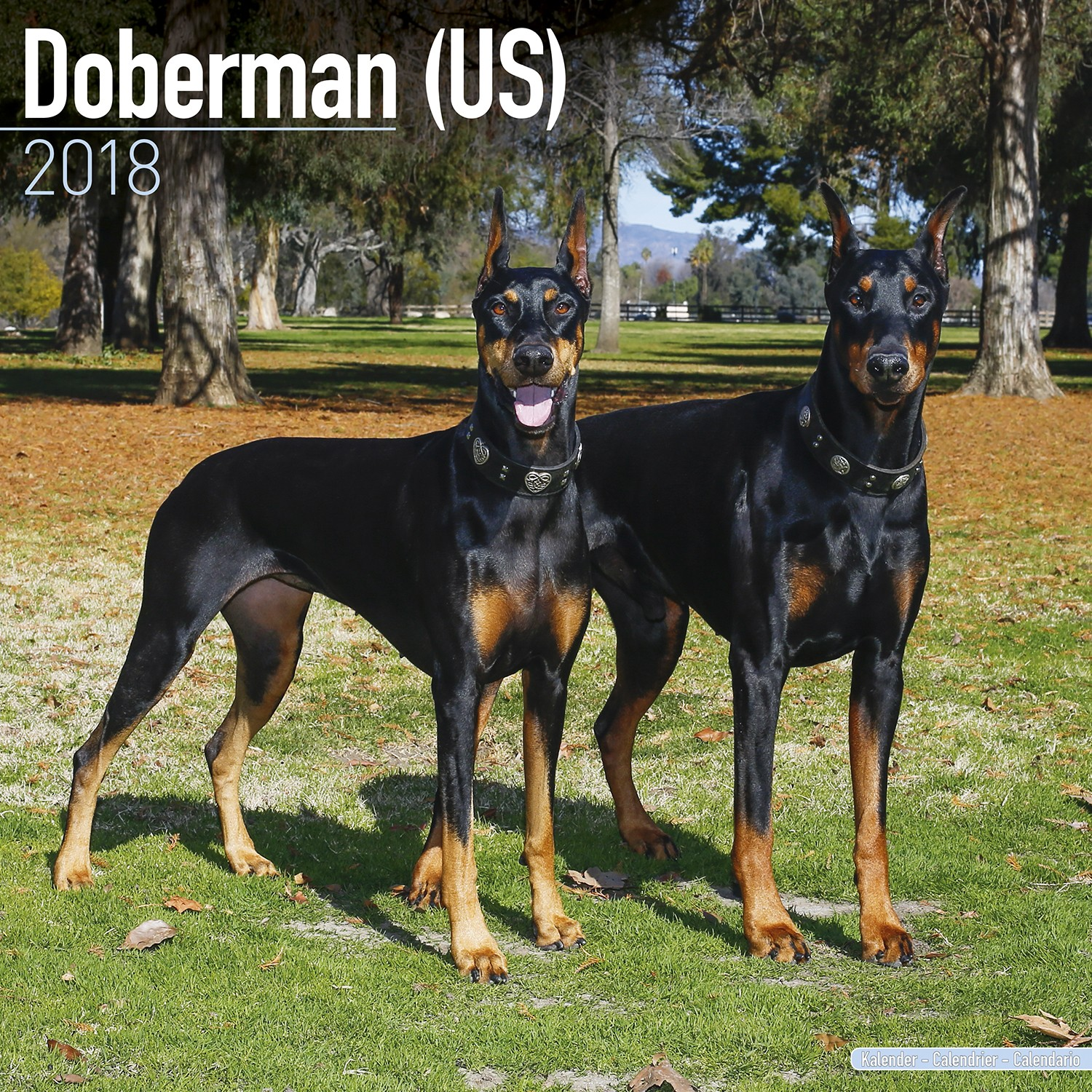 Doberman (Us) Wall Calendar 2018