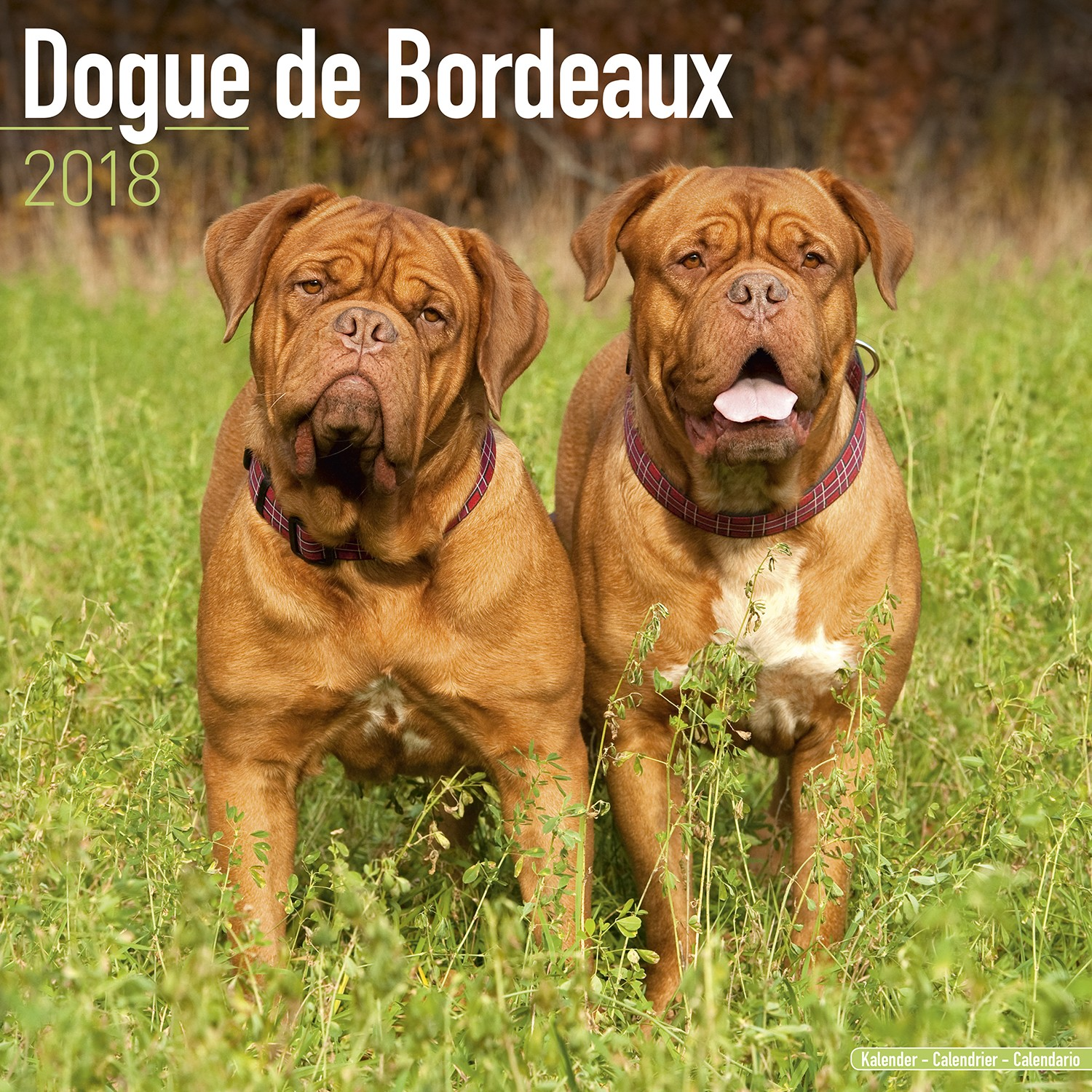 Dogue De Bordeaux Wall Calendar 2018