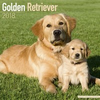 Golden Retriever Wall Calendar 2018
