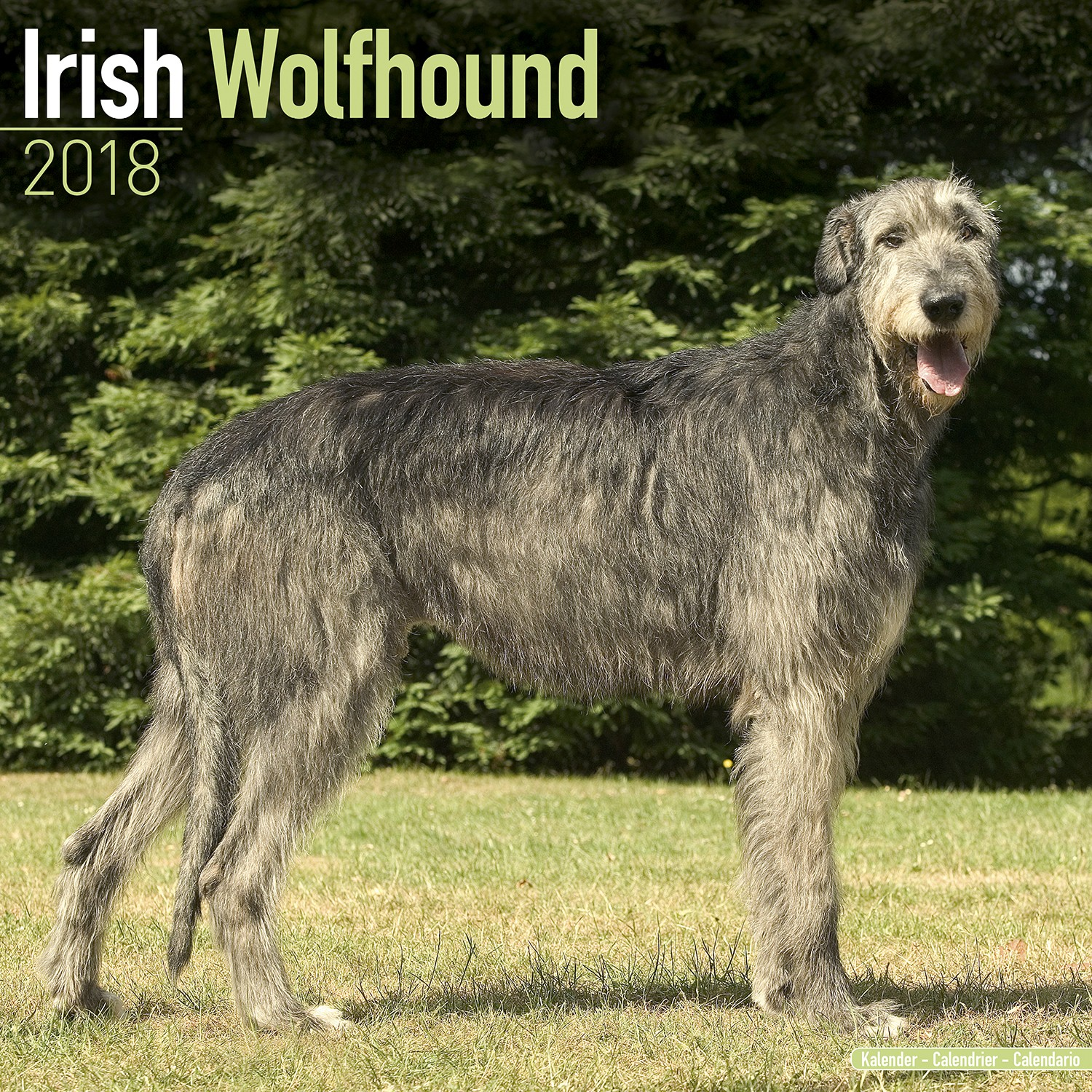 Irish Wolfhound Wall Calendar 2018