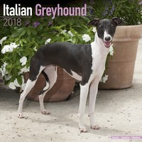 Italian Greyhound Wall Calendar 2018