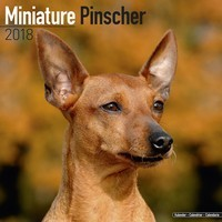 Miniature Pinscher Wall Calendar 2018
