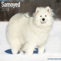 Samoyed Wall Calendar 2018