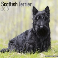 Scottish Terrier Wall Calendar 2018