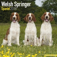 Welsh Springer Spaniel Wall Calendar 2018