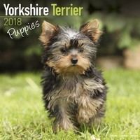 Yorkshire Terrier Puppies Wall Calendar 2018