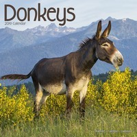 Donkeys Wall Calendar 2019