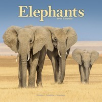 Elephants Wall Calendar 2019