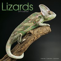 Lizards Wall Calendar 2019