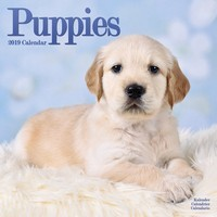 Puppies Wall Calendar 2019