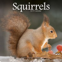 Squirrels Wall Calendar 2019