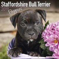 Staffordshire Bull Terrier Puppies Wall Calendar 2019