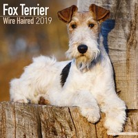 Fox Terrier (Wirehaired) Wall Calendar 2019
