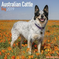 Australian Cattle Dog Wall Calendar 2019
