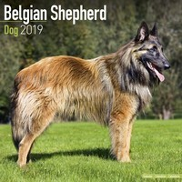 Belgian Shepherd Dog Wall Calendar 2019
