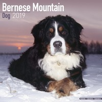 Bernese Mountain Dog Wall Calendar 2019