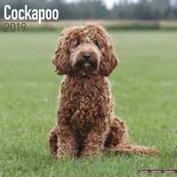 Cockapoo Wall Calendar 2019