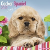 Cocker Spaniel Puppies Wall Calendar 2019