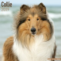 Collie Wall Calendar 2019