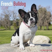 French Bulldog Wall Calendar 2019