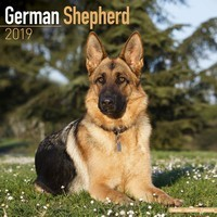 German Shepherd Wall Calendar 2019