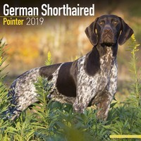 German Shorthair Pointer Wall Calendar 2019