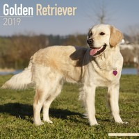 Golden Retriever Wall Calendar 2019